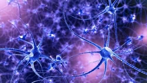 Hjernens plasticitet: Egenskaber og typer
