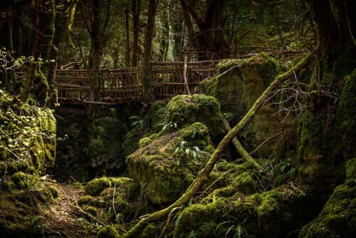 Skov med bro