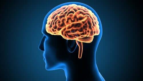 Victor Leborgne - En sag om neurovidenskab