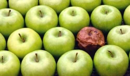 Teorien om det rådne æble på arbejdspladsen