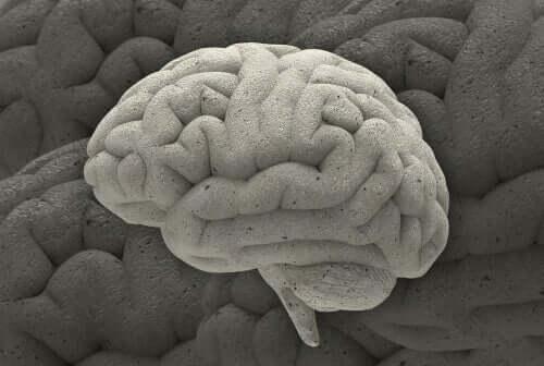 Tre fascinerende cases indenfor hjerneforskning