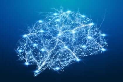 illumineret hjerne