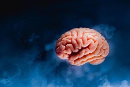 Hjerne på en blå baggrund