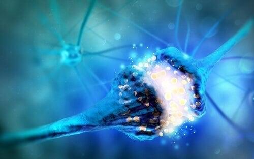 Monoaminer og deres essentielle funktioner