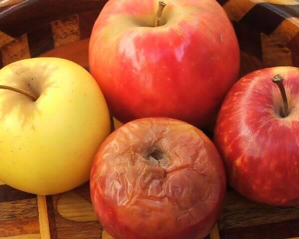 Råddent æble blandt friske æbler symboliserer det rådne æble på arbejdspladsen