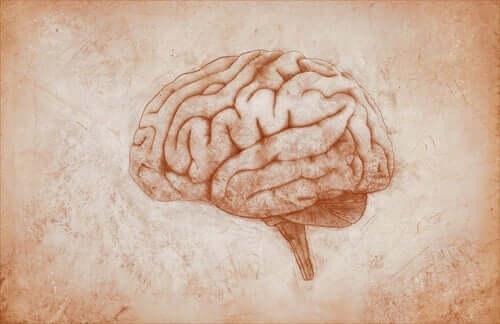 Tegning af hjerne kan forklare, om man kan arve en depression