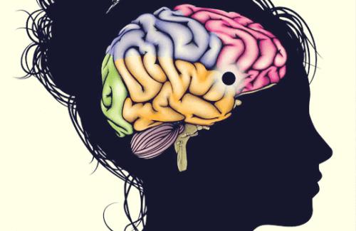 Nucleus accumbens: Læring, motivation og lykke