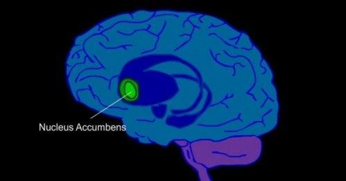 Animation af hjerne