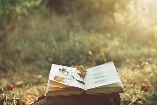 bog på en træstub udenfor