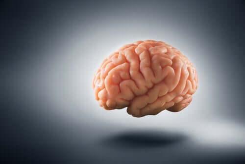 et foto af hjernen