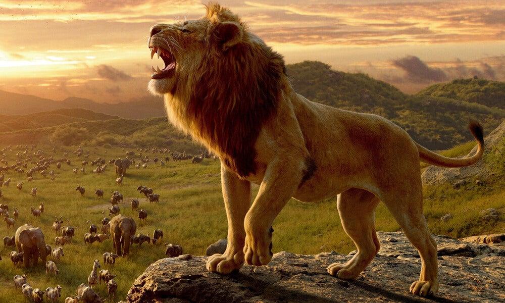 Løve, der brøler på klippe