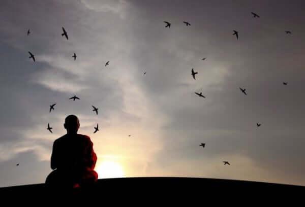 munk, der kigger på fugle