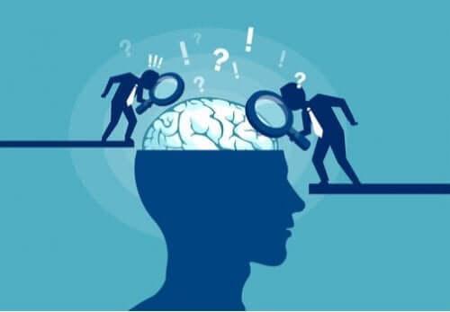 illustration af to, der undersøger en hjerne, for at aflive myter indenfor hjerneforskning