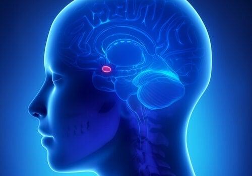 Amygdala og angst: Hvad er sammenhængen?