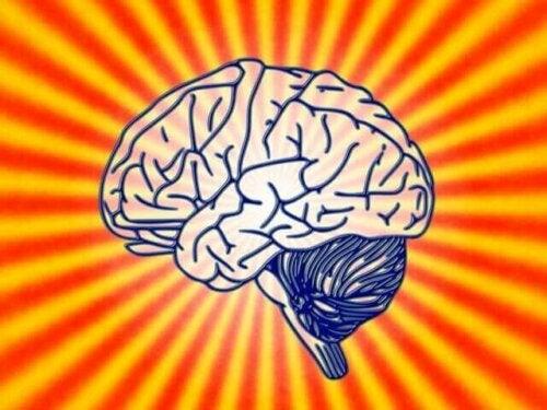 Hvad handler adfærdsmæssig neurovidenskab om?