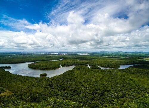 Levi-Strauss var på mange ekspeditioner i Amazonas