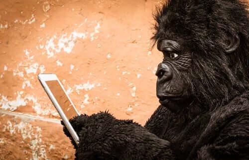 En gorilla bruger en mobiltelefon