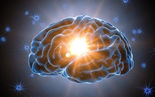 Nucleus accumbens i hjernen aktiveres, når vi overraskes