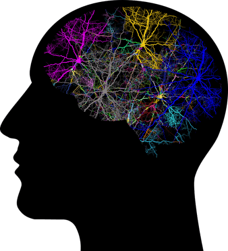 Forskning i menneskelig adfærd illustreres af aktiv hjerne