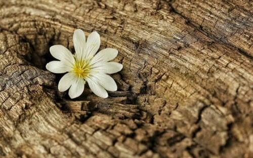 En blomst på træstamme symboliserer modstandsdygtighed under coronavirus-krisen
