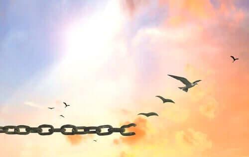 Fugle bryder fri fra kæde på himlen