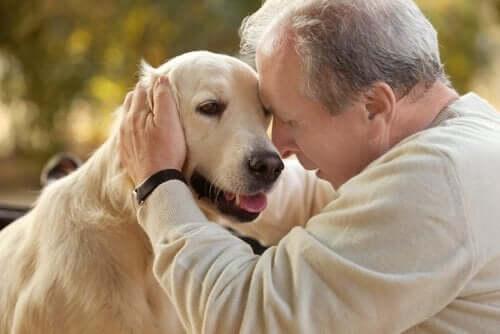 Dyreassisteret terapi for patienter med Alzheimers