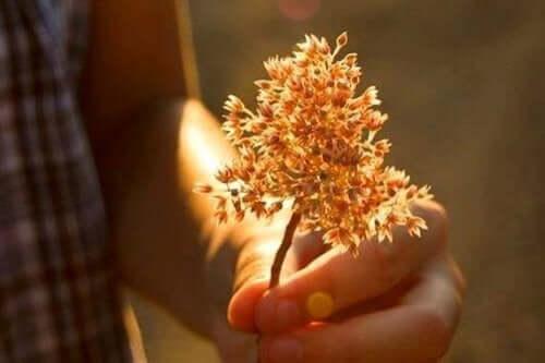 Hånd, der holder en blomst