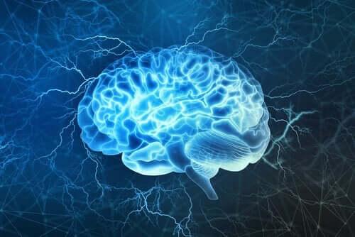 Hjerne i blå farver