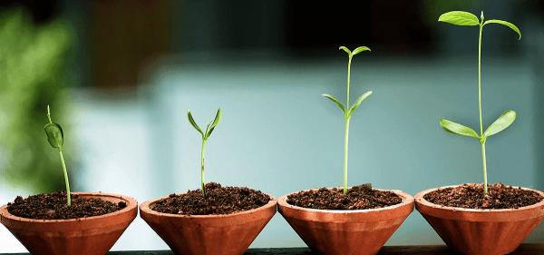 Unge planter i potter som symbol for væksten under integreret psykologi