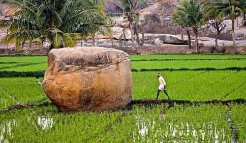 Person går på rismark