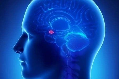 Figur viser amygdala