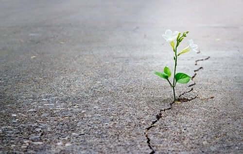 Blomst skyder op gennem asfalten