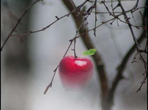 Et æble på en gren
