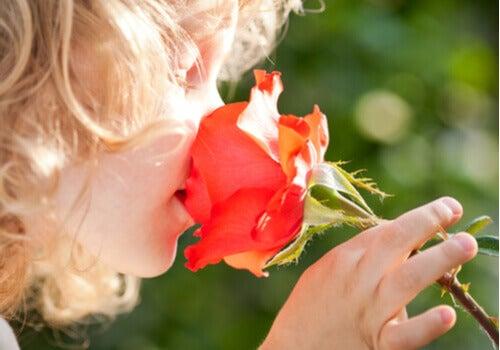 Barn, der dufter til en blomst