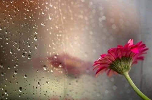 Blomst mod regnfyldt vindue
