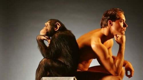 Abe og mand ryg mod ryg