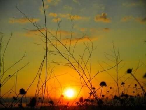 Landskab med solnedgang
