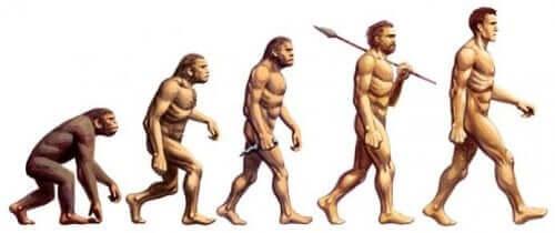 Menneskelig evolution fra abe til menneske