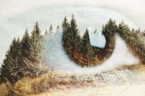 Øje foran skov