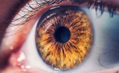 Fotografisk hukommelse illustreres af nærbillede af øje