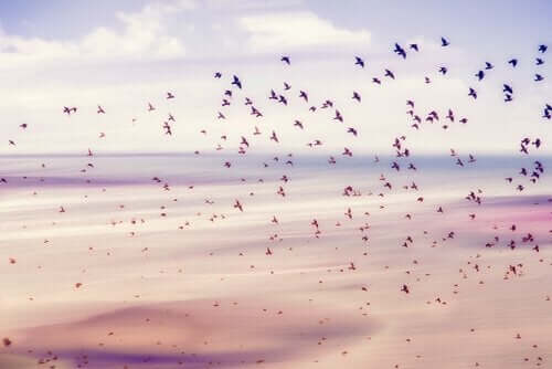 Fugle flyver frit