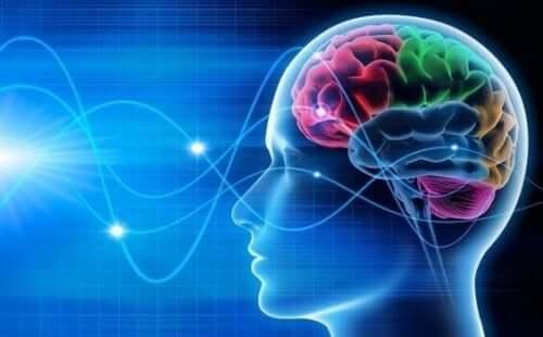 Bølger i hjerne