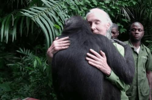 Jane Goodall - en global ekspert og aktivist