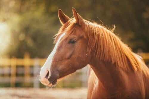 Frygt for heste eller hippofobi