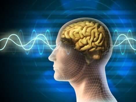 Neuropsykologi illustreres af hjerne med bølger igennem