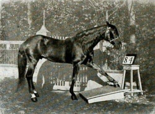 Sort hest foran tavle med tal