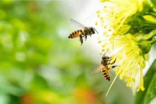 Frygt for bier: Symptomer på apifobi