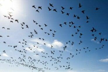 3 måder til at overvinde frygten for fugle