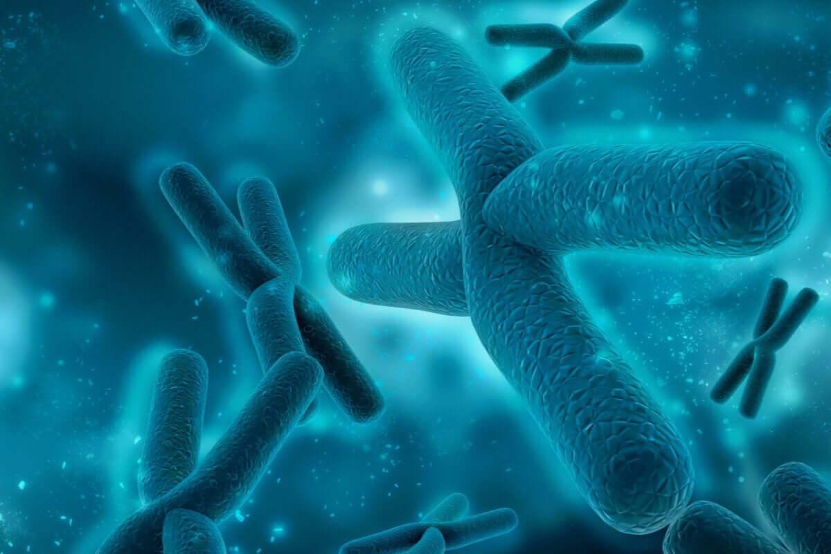 Illustration af kromosomer