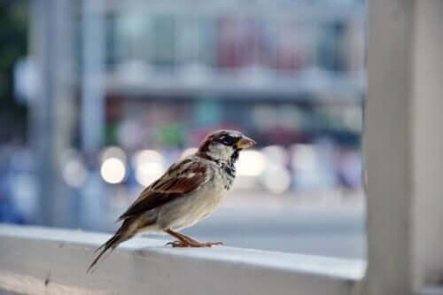 Lille fugl i vindue